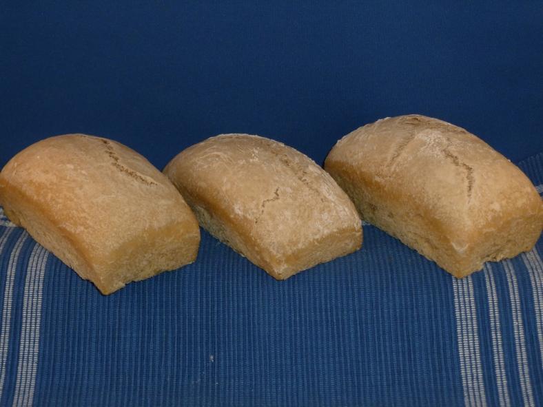Overnight White Sourdough Bread in the solar oven