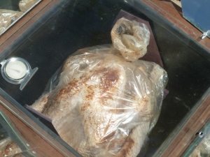 cooking a turkey in a solar oven